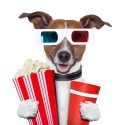 16062387 - 3d glasses movie popcorn dog watching a film