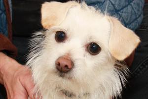Dogs_Sheltered_IMG_9507