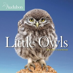Little Owls Mini Wall Calendar 2021